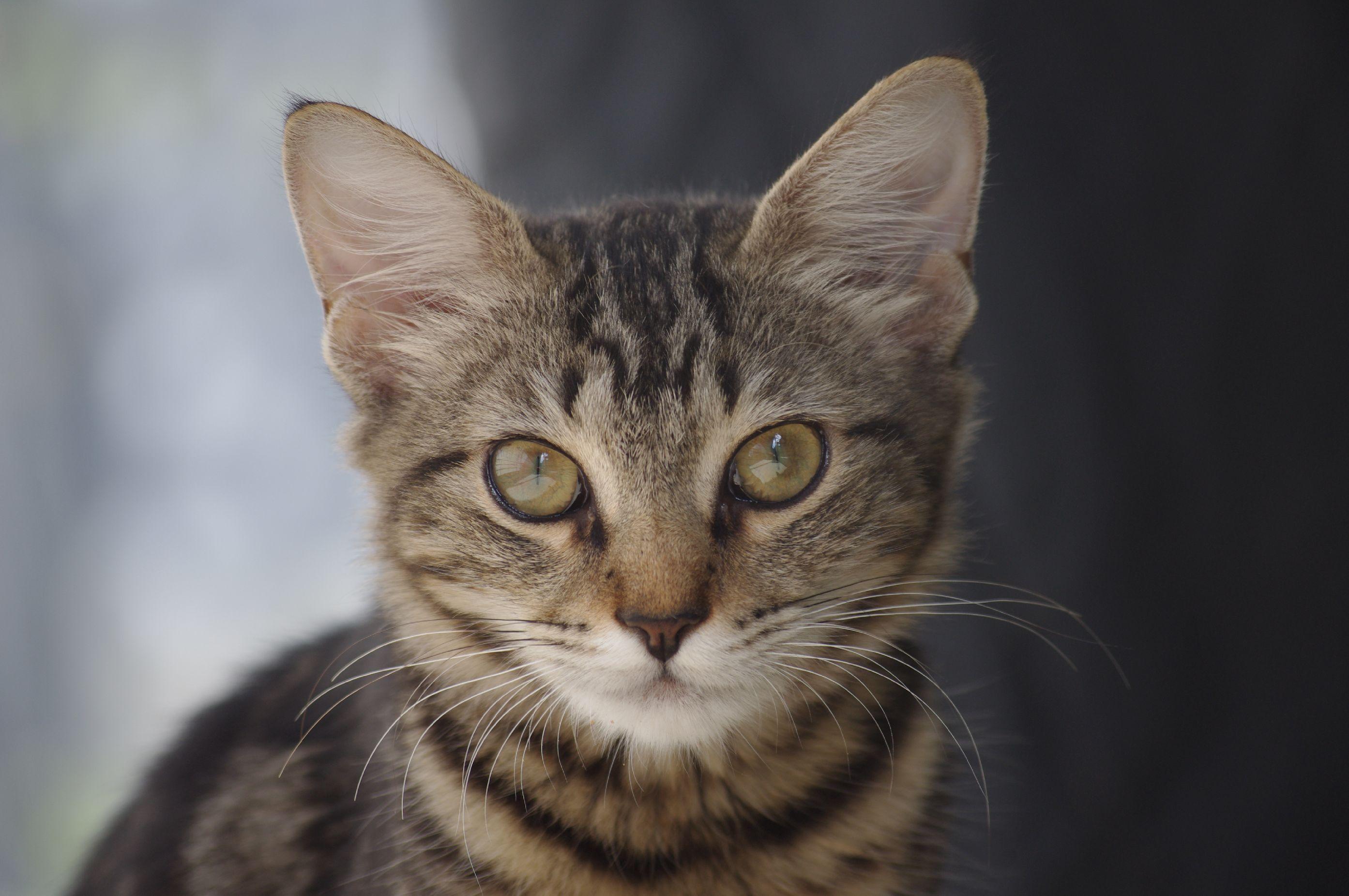 cat meow ashton morris